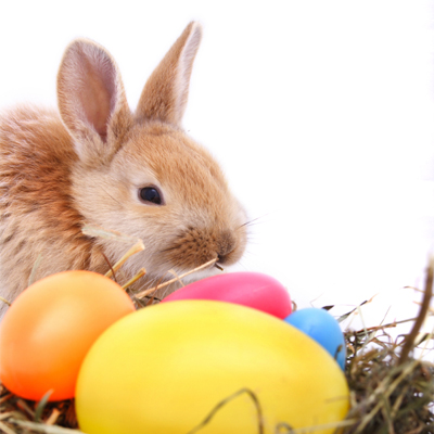 An Easter message with a difference (Tips on how to eat chocolate)